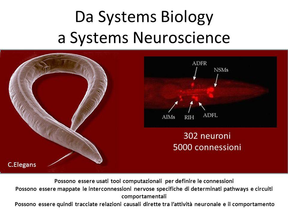 Da Systems Biology a Systems Neuroscience 302 neuroni 5000 connessioni Possono essere usati tool computazionali per definire le connessioni Possono es