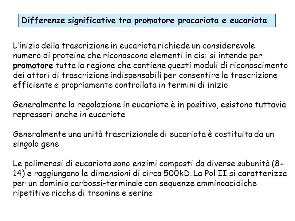 Linizio della trascrizione in eucariota richiede un considerevole numero di proteine che riconoscono elementi in cis: si intende per promotore tutta l