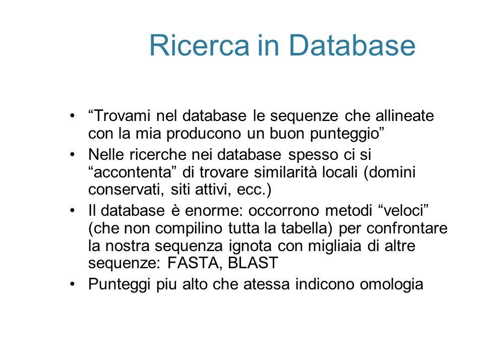 Ricerca in Database Trovami nel database le sequenze che allineate con la mia producono un buon punteggio Nelle ricerche nei database spesso ci si acc