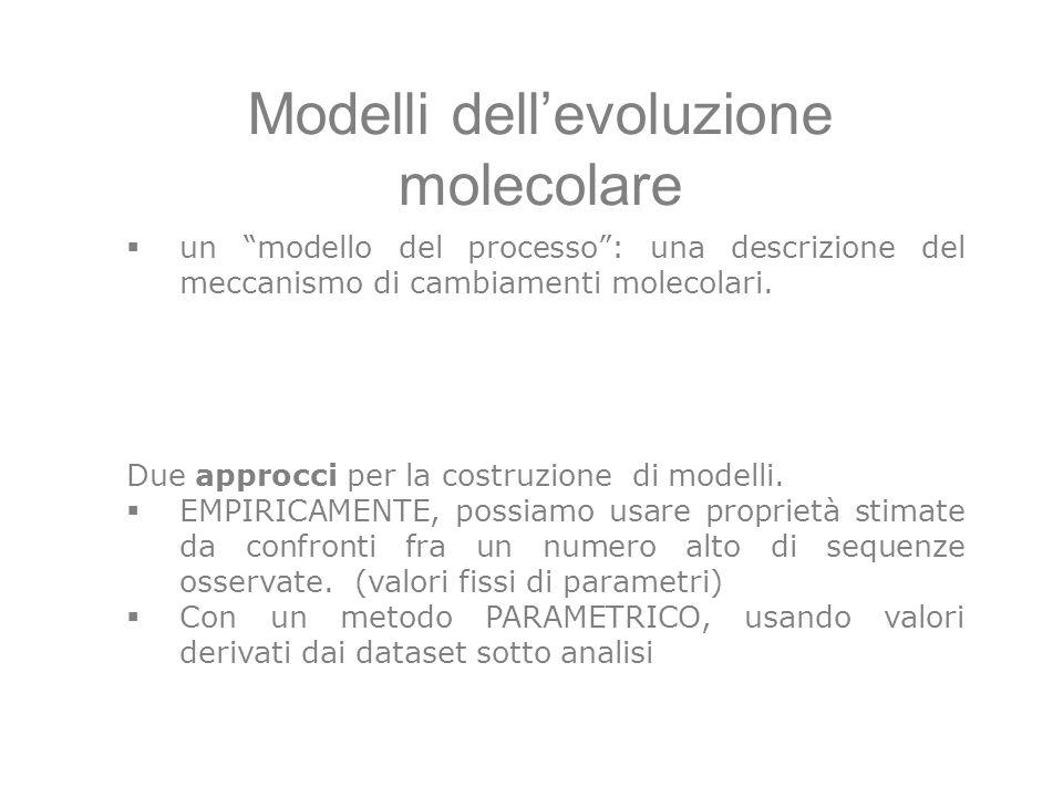 Modelli dellevoluzione molecolare un modello del processo: una descrizione del meccanismo di cambiamenti molecolari. Due approcci per la costruzione d