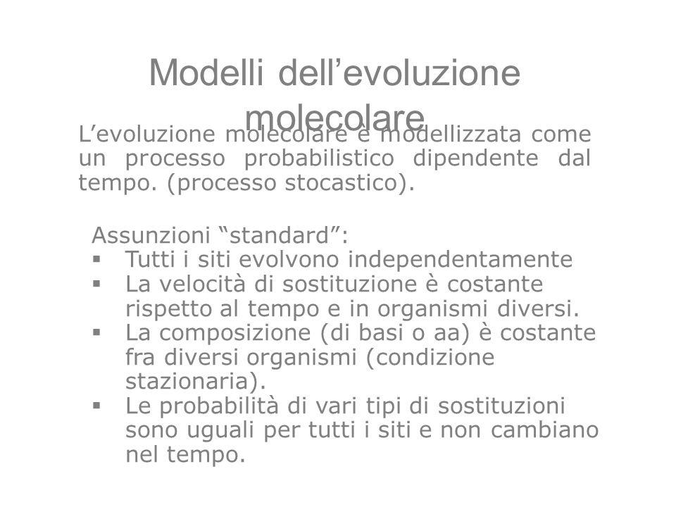 Modelli dellevoluzione molecolare Assunzioni standard: Tutti i siti evolvono independentamente La velocità di sostituzione è costante rispetto al temp
