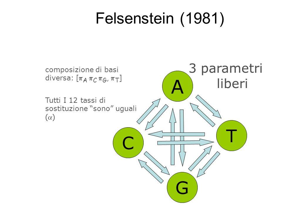 Felsenstein (1981) A C G T composizione di basi diversa: [ A C G, T ] Tutti I 12 tassi di sostituzione sono uguali ( ) 3 parametri liberi