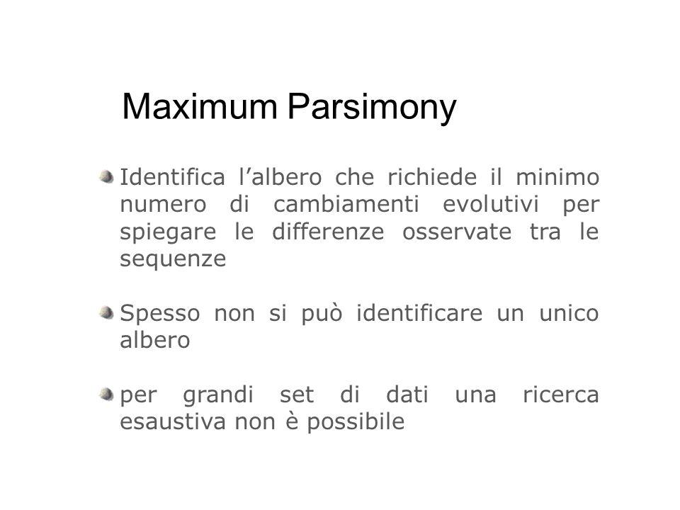 Maximum Parsimony Identifica lalbero che richiede il minimo numero di cambiamenti evolutivi per spiegare le differenze osservate tra le sequenze Spess