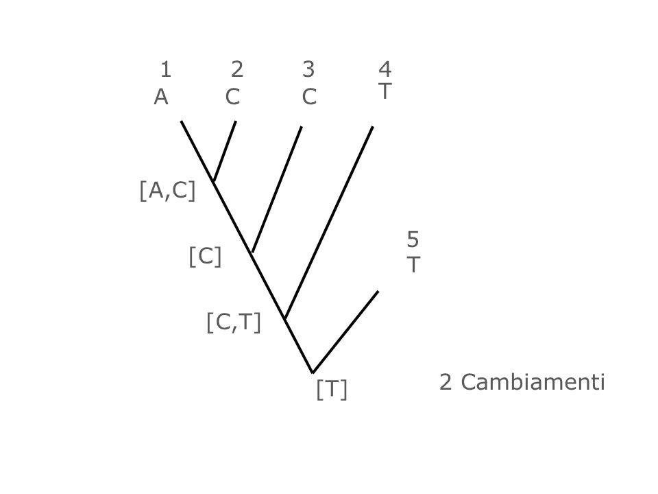 1234 5 ACC T T [A,C] [C] [C,T] [T] 2 Cambiamenti