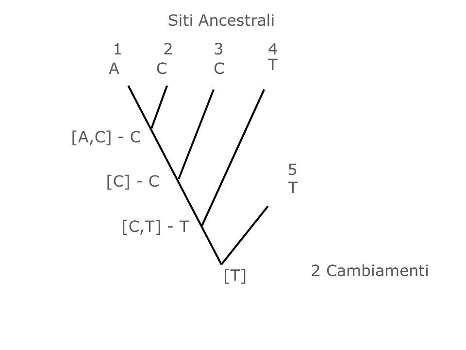 1234 5 ACC T T [A,C] - C [C] - C [C,T] - T [T] 2 Cambiamenti Siti Ancestrali