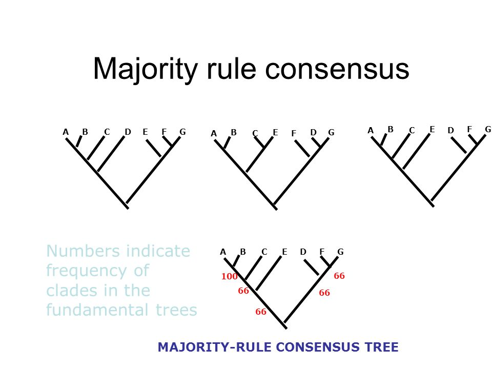 Majority rule consensus ABCDEFG A B C E D FG ABCEDFG MAJORITY-RULE CONSENSUS TREE A B C E F DG 100 66 Numbers indicate frequency of clades in the fund
