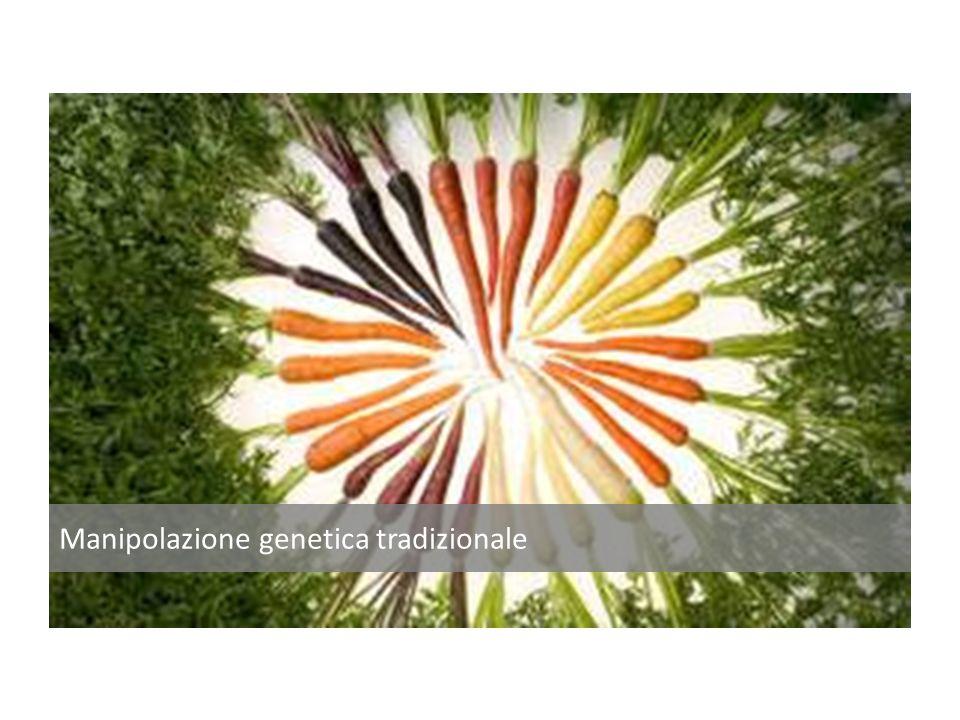 Manipolazione genetica moderna – DNA RICOMBINANTE