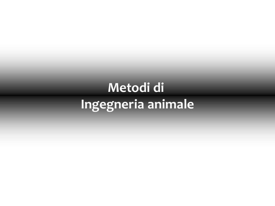 Produzione di organi per xenotrapianti 5 X Rigetto dovuto alla reattività degli anticorpi umani verso le proteine endoteliali esogene (che mancano di uno zucchero, il fucosio) Inserimento in animali transgenici della fucosio-transferasi