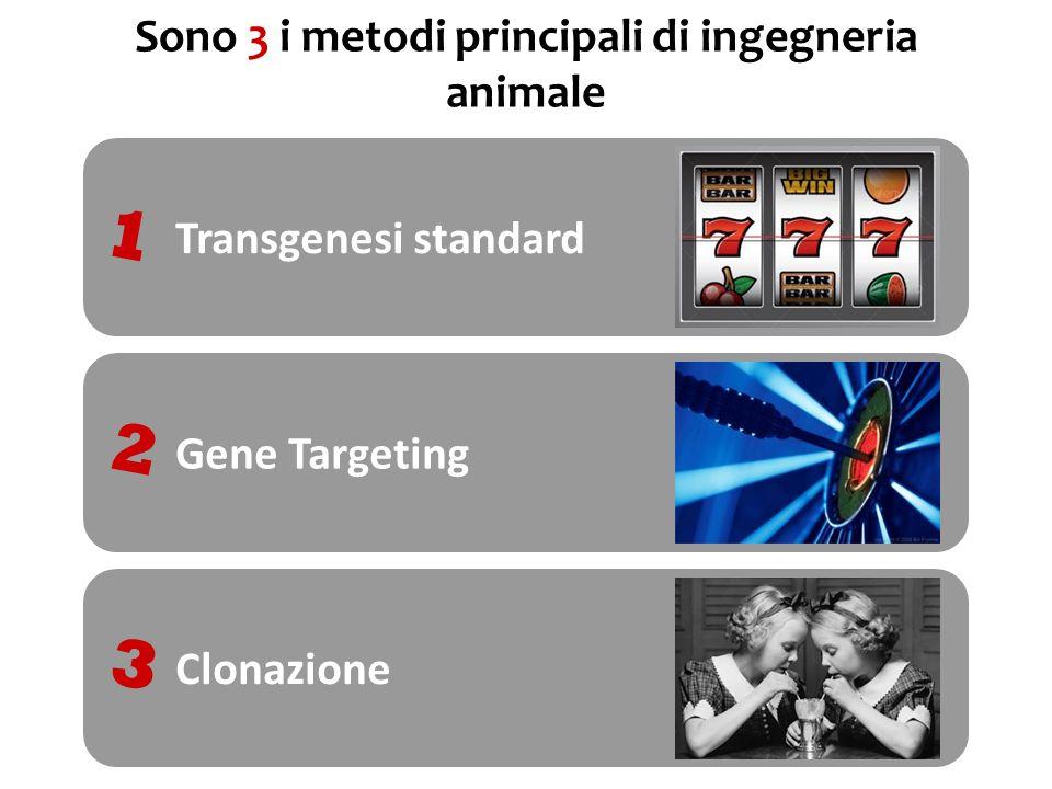 1 Microiniezione di DNA lineare nella cellula uovo fecondata SCOPO : Guadagno di funzione CARATTERISTICA : inserzione random, casuale