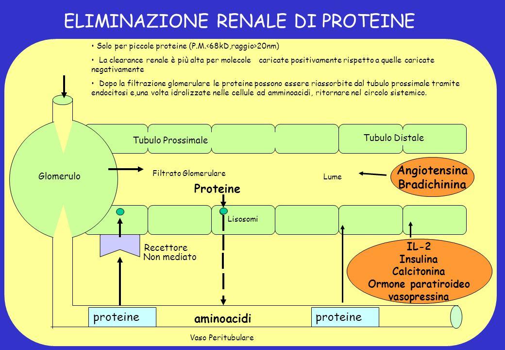 ELIMINAZIONE RENALE DI PROTEINE aminoacidi Tubulo Prossimale Filtrato Glomerulare Lume Angiotensina Bradichinina Tubulo Distale Vaso Peritubulare IL-2