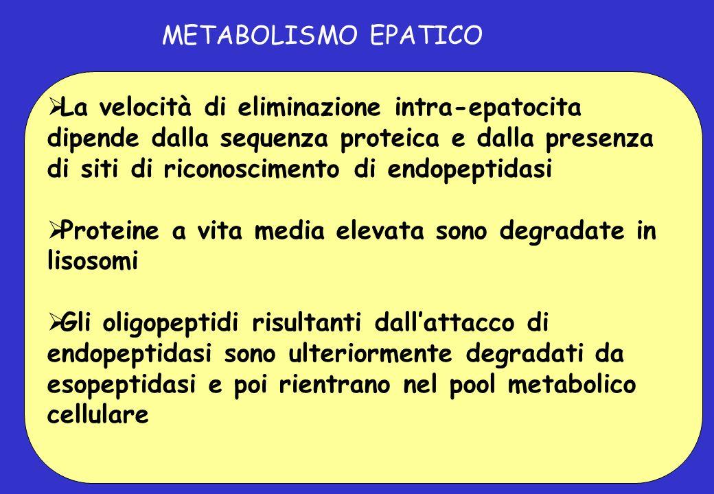 METABOLISMO EPATICO La velocità di eliminazione intra-epatocita dipende dalla sequenza proteica e dalla presenza di siti di riconoscimento di endopept