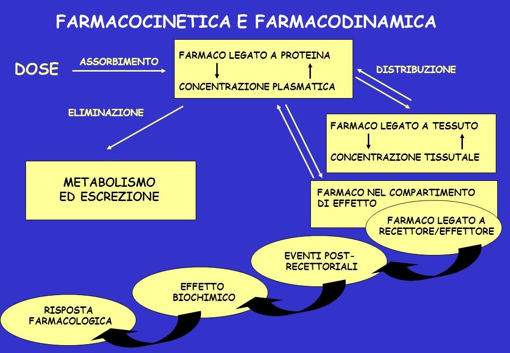 FARMACOCINETICA E FARMACODINAMICA FARMACO LEGATO A PROTEINA CONCENTRAZIONE PLASMATICA FARMACO LEGATO A TESSUTO CONCENTRAZIONE TISSUTALE DOSE ASSORBIME