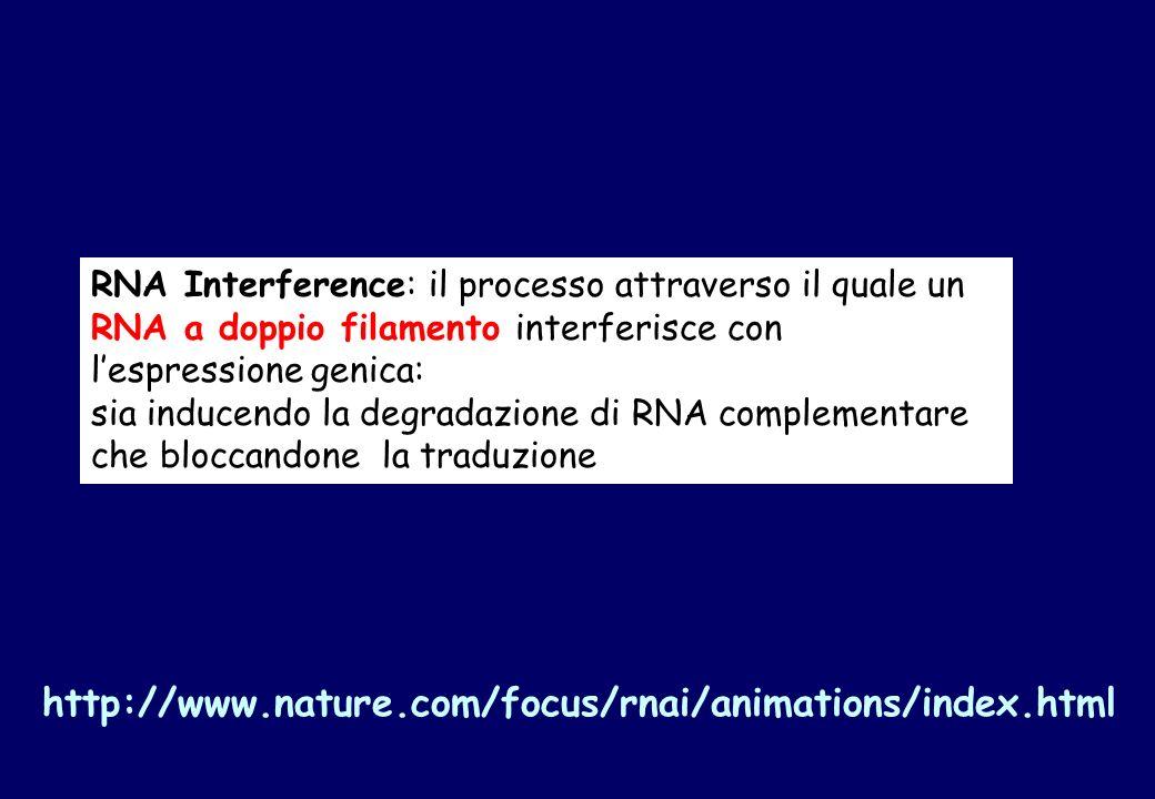 RNA Interference: il processo attraverso il quale un RNA a doppio filamento interferisce con lespressione genica: sia inducendo la degradazione di RNA complementare che bloccandone la traduzione http://www.nature.com/focus/rnai/animations/index.html