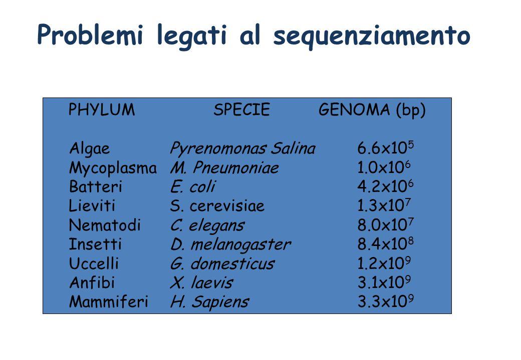 Problemi legati al sequenziamento Dimensioni dei genomi PHYLUMSPECIE GENOMA (bp) Algae Pyrenomonas Salina6.6x10 5 Mycoplasma M. Pneumoniae1.0x10 6 Bat