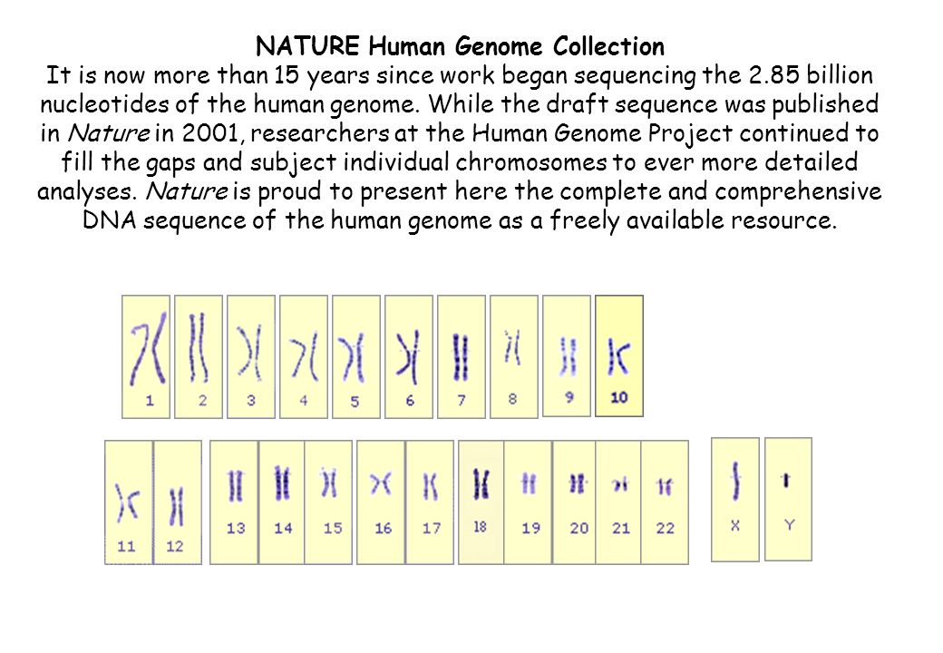 NATURE Human Genome Collection It is now more than 15 years since work began sequencing the 2.85 billion nucleotides of the human genome. While the dr