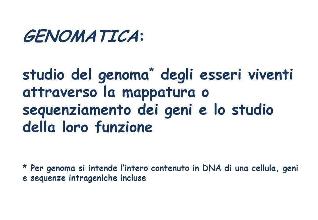 GENOMATICA: studio del genoma * degli esseri viventi attraverso la mappatura o sequenziamento dei geni e lo studio della loro funzione * Per genoma si
