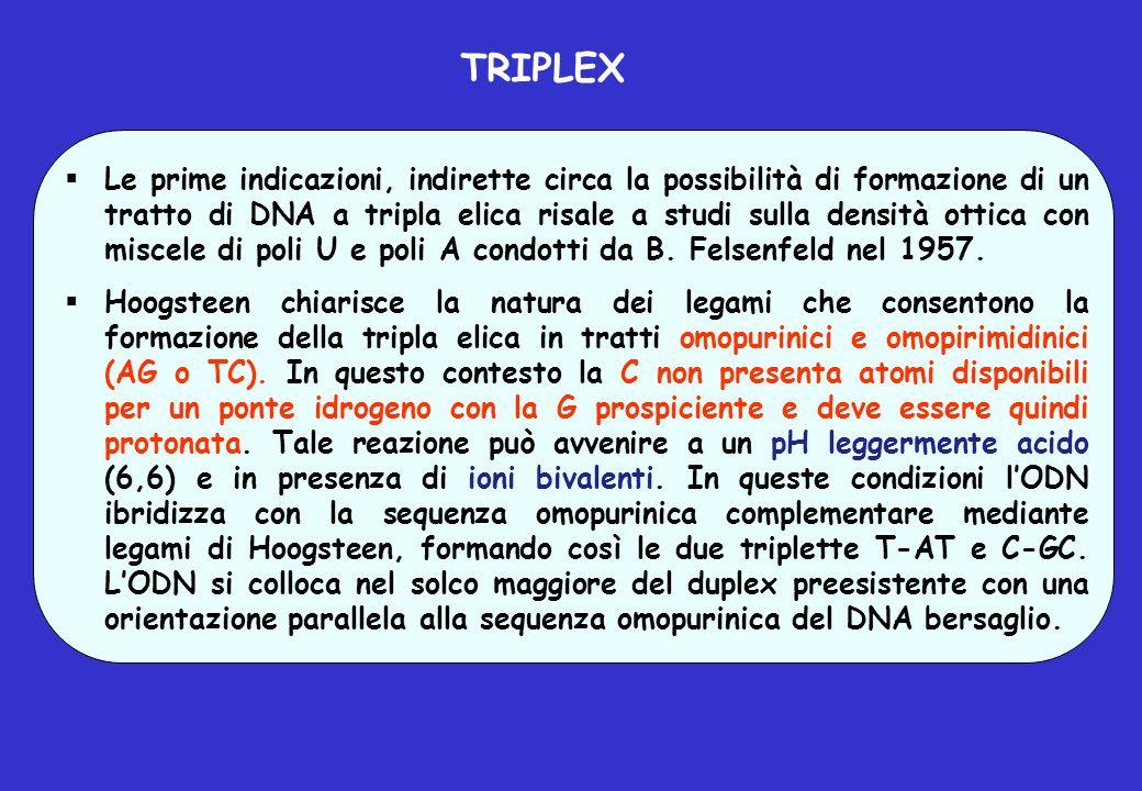 TRIPLEX Le prime indicazioni, indirette circa la possibilità di formazione di un tratto di DNA a tripla elica risale a studi sulla densità ottica con