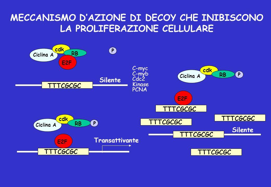 MECCANISMO DAZIONE DI DECOY CHE INIBISCONO LA PROLIFERAZIONE CELLULARE TTTCGCGC E2F cdk P P P RB Ciclina A Silente Transattivante C-myc C-myb Cdc2 Kin