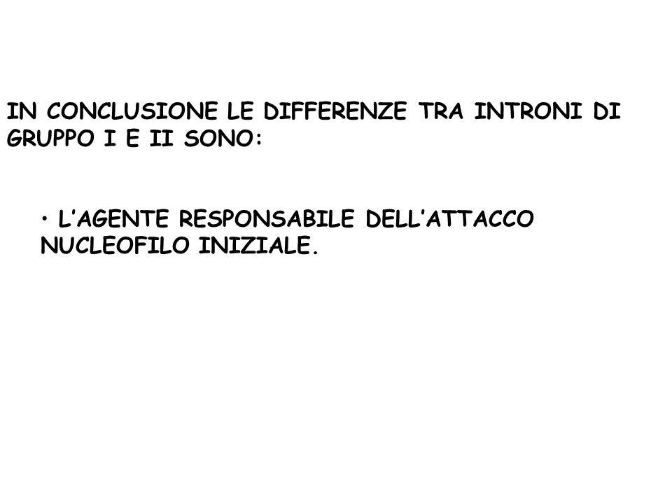 IN CONCLUSIONE LE DIFFERENZE TRA INTRONI DI GRUPPO I E II SONO: LAGENTE RESPONSABILE DELLATTACCO NUCLEOFILO INIZIALE.