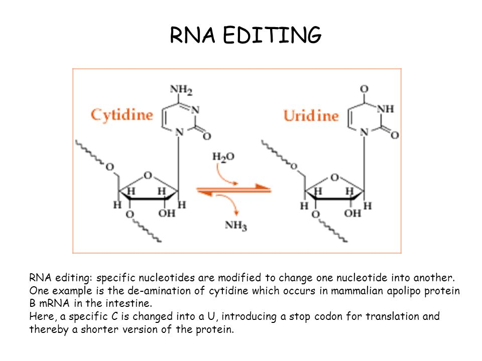 RNA editing: specific nucleotides are modified to change one nucleotide into another. One example is the de-amination of cytidine which occurs in mamm