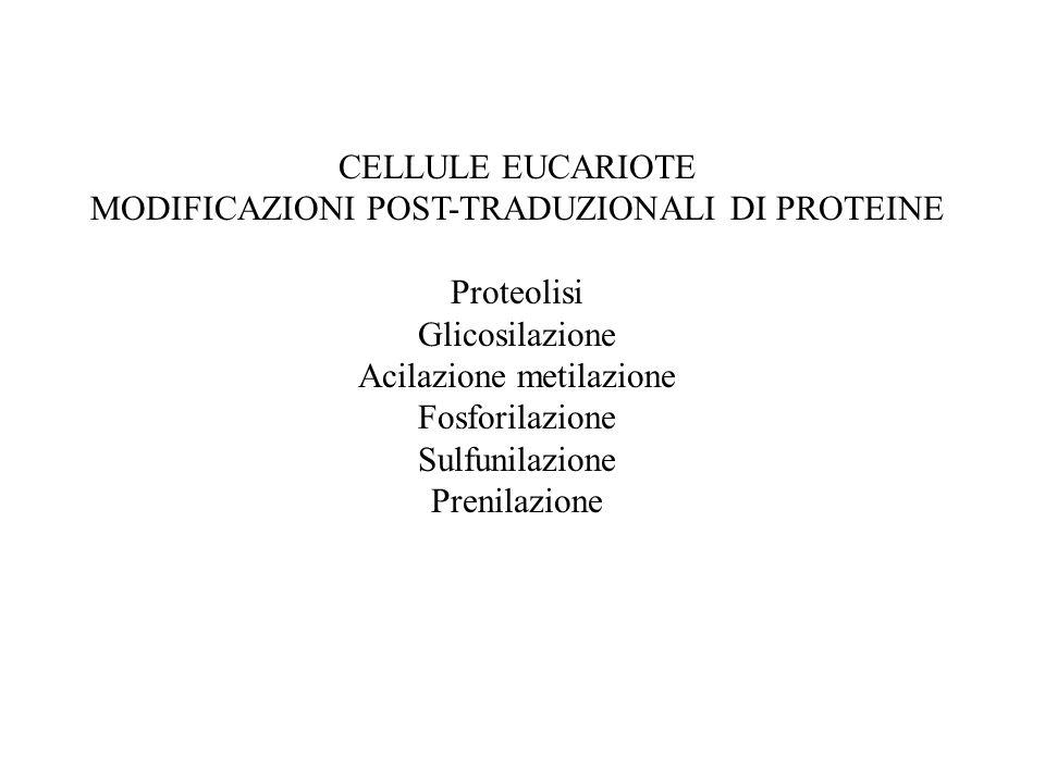 CELLULE EUCARIOTE MODIFICAZIONI POST-TRADUZIONALI DI PROTEINE Proteolisi Glicosilazione Acilazione metilazione Fosforilazione Sulfunilazione Prenilazi