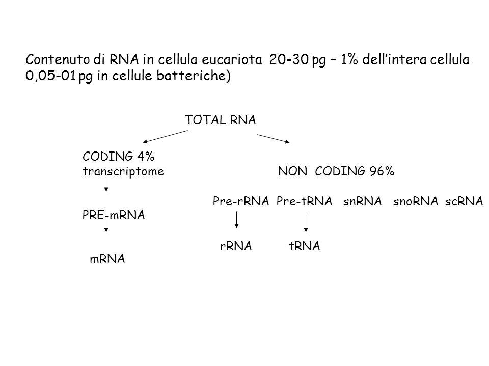 Contenuto di RNA in cellula eucariota 20-30 pg – 1% dellintera cellula 0,05-01 pg in cellule batteriche) TOTAL RNA CODING 4% transcriptomeNON CODING 9