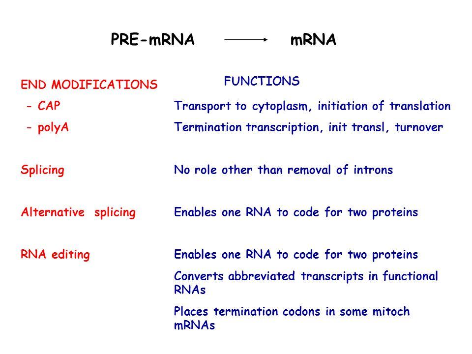 PRE-mRNA mRNA END MODIFICATIONS - CAP - polyA Splicing Alternative splicing RNA editing Transport to cytoplasm, initiation of translation Termination