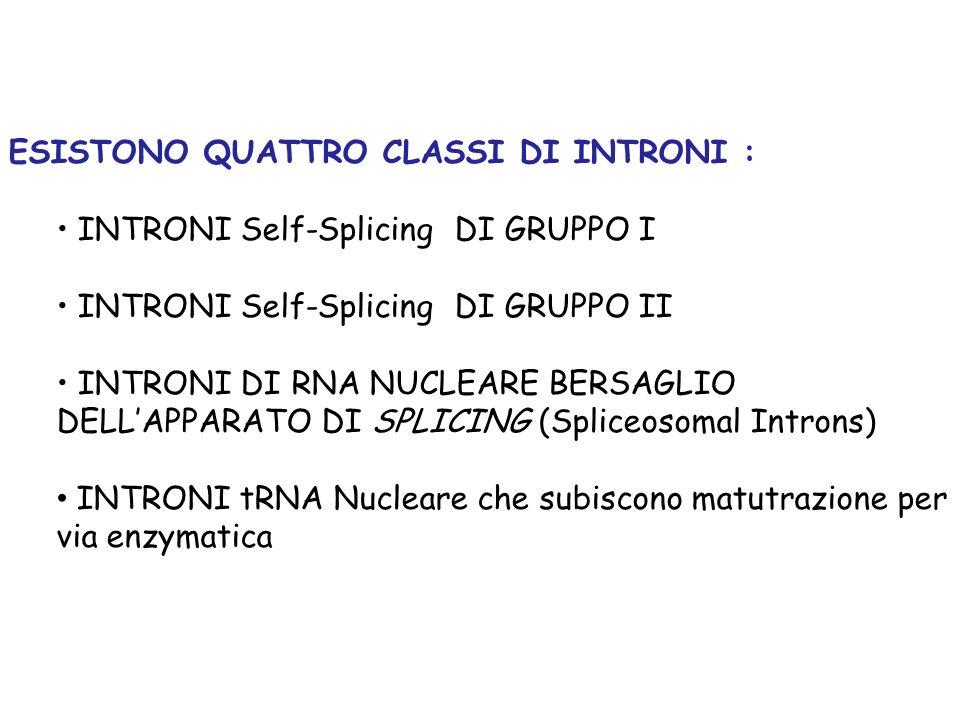 INTRONI DI RNA NUCLEARE BERSAGLIO DELLAPPARATO DI SPLICING