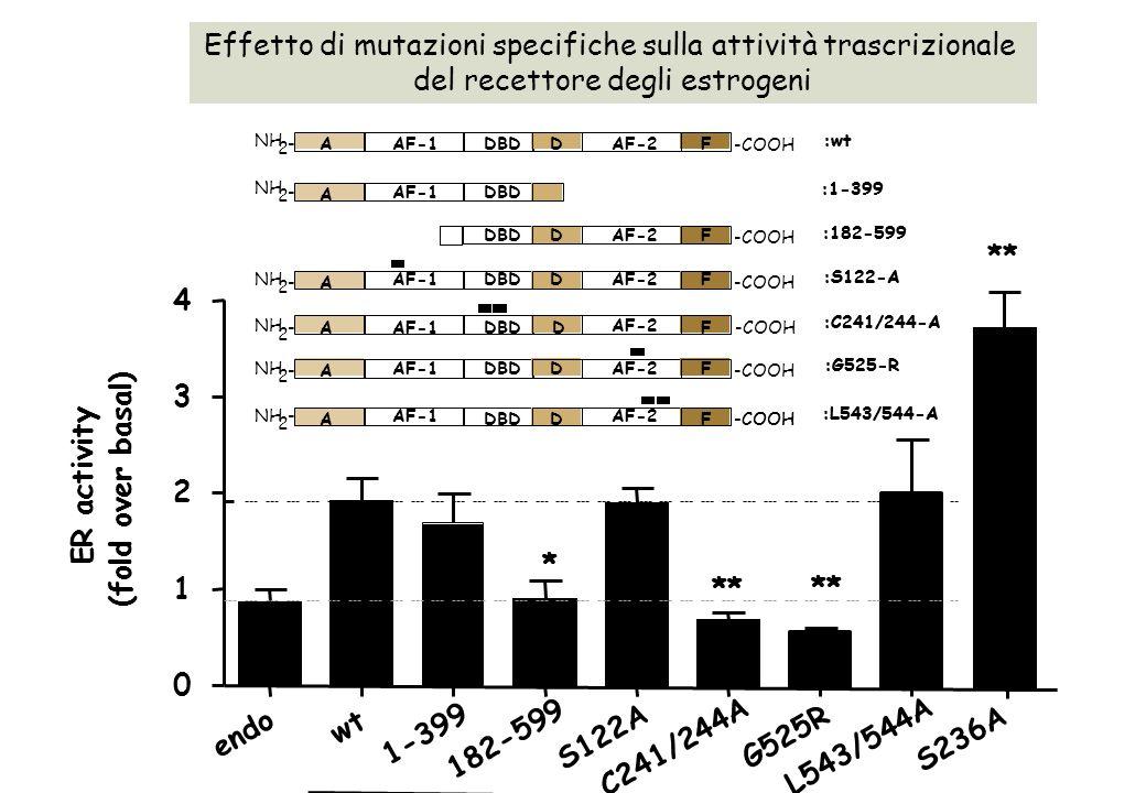 Effetto di mutazioni specifiche sulla attività trascrizionale del recettore degli estrogeni