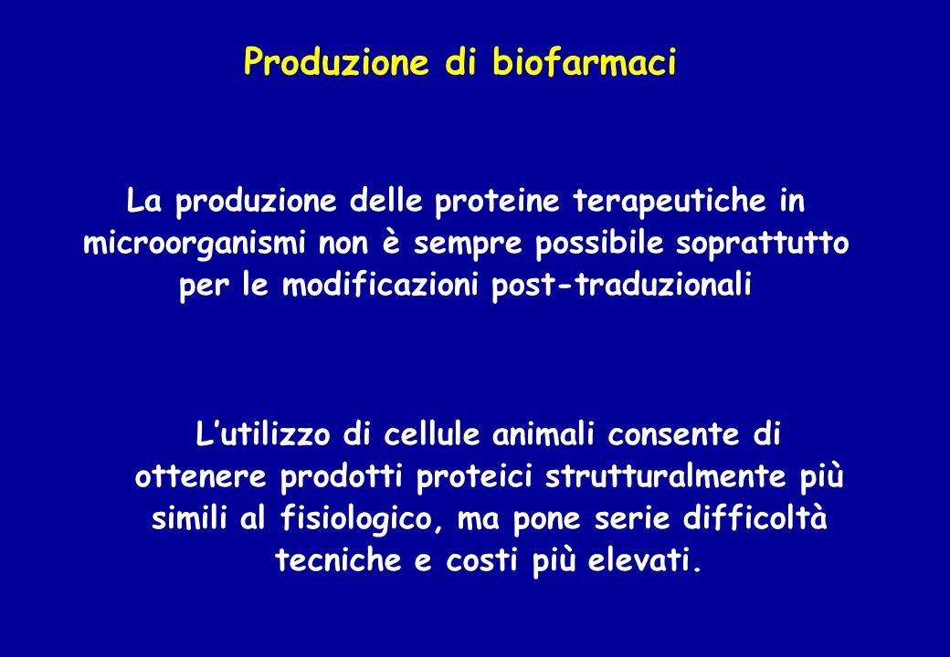 Produzione di biofarmaci La produzione delle proteine terapeutiche in microorganismi non è sempre possibile soprattutto per le modificazioni post-trad