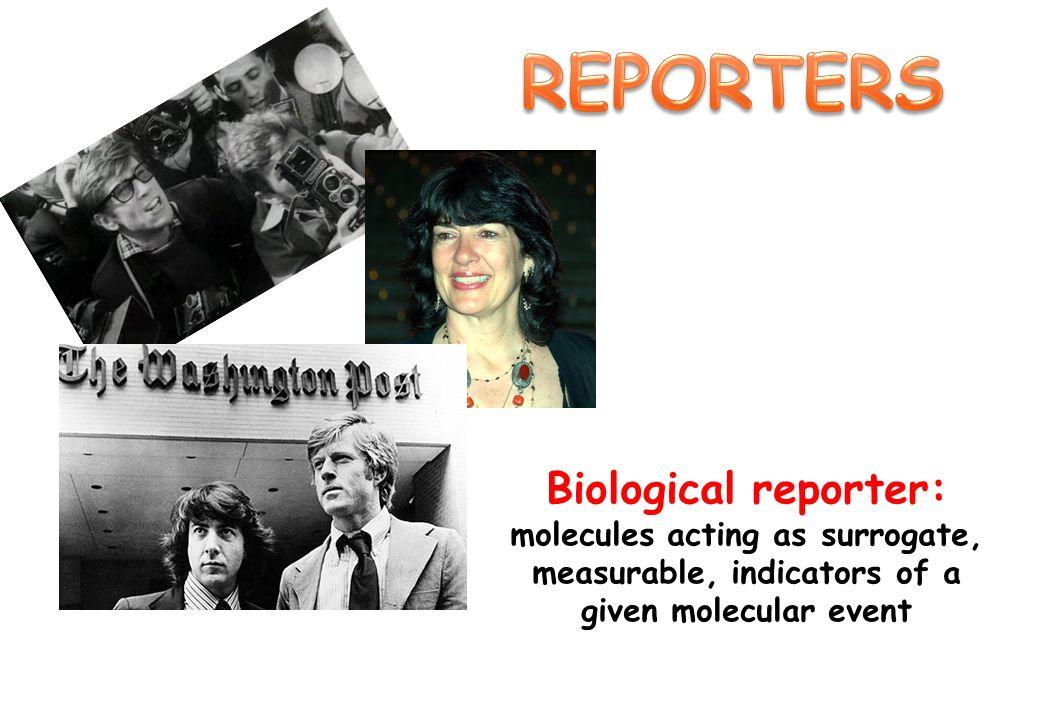 Screening di molecole farmacologicamente attive.