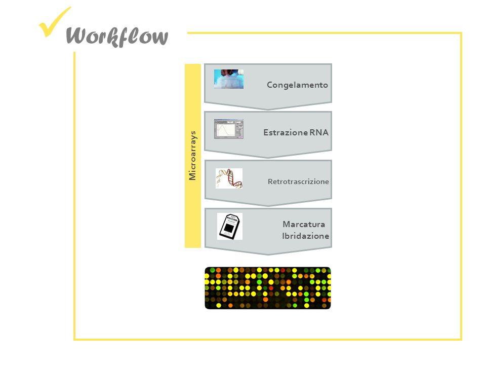 Workflow Congelamento Estrazione RNA Retrotrascrizione Microarrays Marcatura Ibridazione