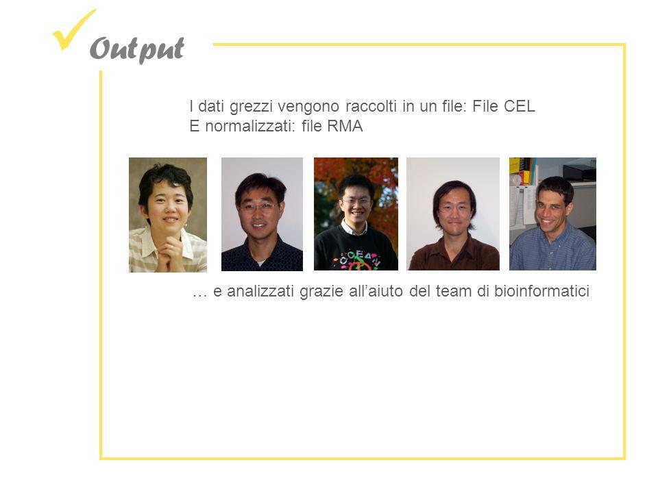 Output I dati grezzi vengono raccolti in un file: File CEL E normalizzati: file RMA … e analizzati grazie allaiuto del team di bioinformatici
