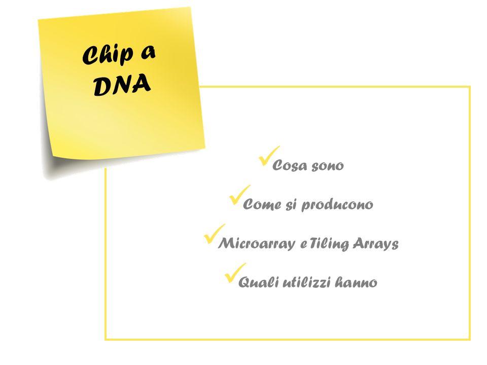 Significato biologico Real time PCR Esperimenti sullanimale Come vengono utilizzati i dati ottenuti nei due esperimenti?