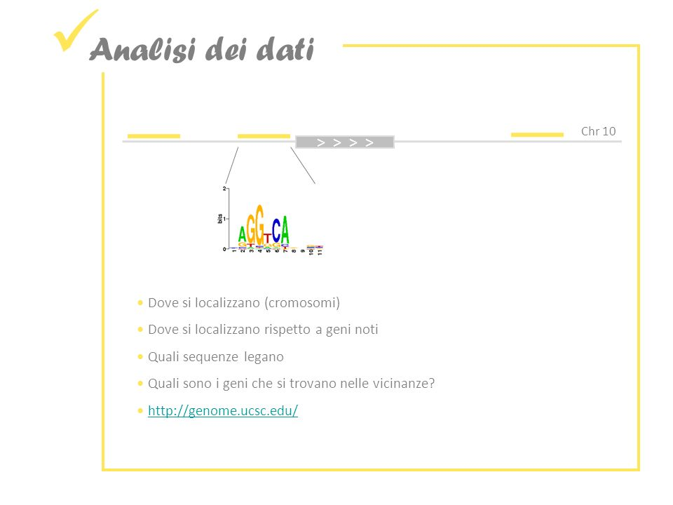 Analisi dei dati Chr 10 > > Dove si localizzano (cromosomi) Dove si localizzano rispetto a geni noti Quali sequenze legano Quali sono i geni che si trovano nelle vicinanze.