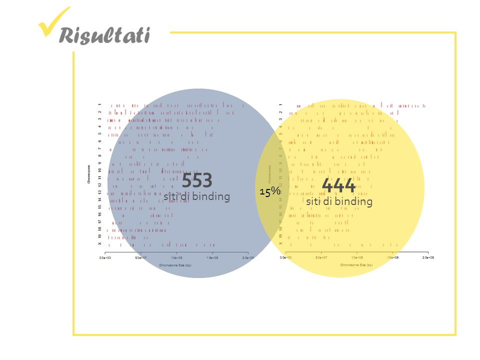 Risultati 553 siti di binding 444 siti di binding 15%