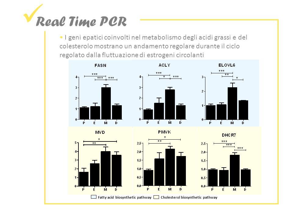 Real Time PCR Fatty acid biosynthetic pathway Cholesterol biosynthetic pathway I geni epatici coinvolti nel metabolismo degli acidi grassi e del colesterolo mostrano un andamento regolare durante il ciclo regolato dalla fluttuazione di estrogeni circolanti