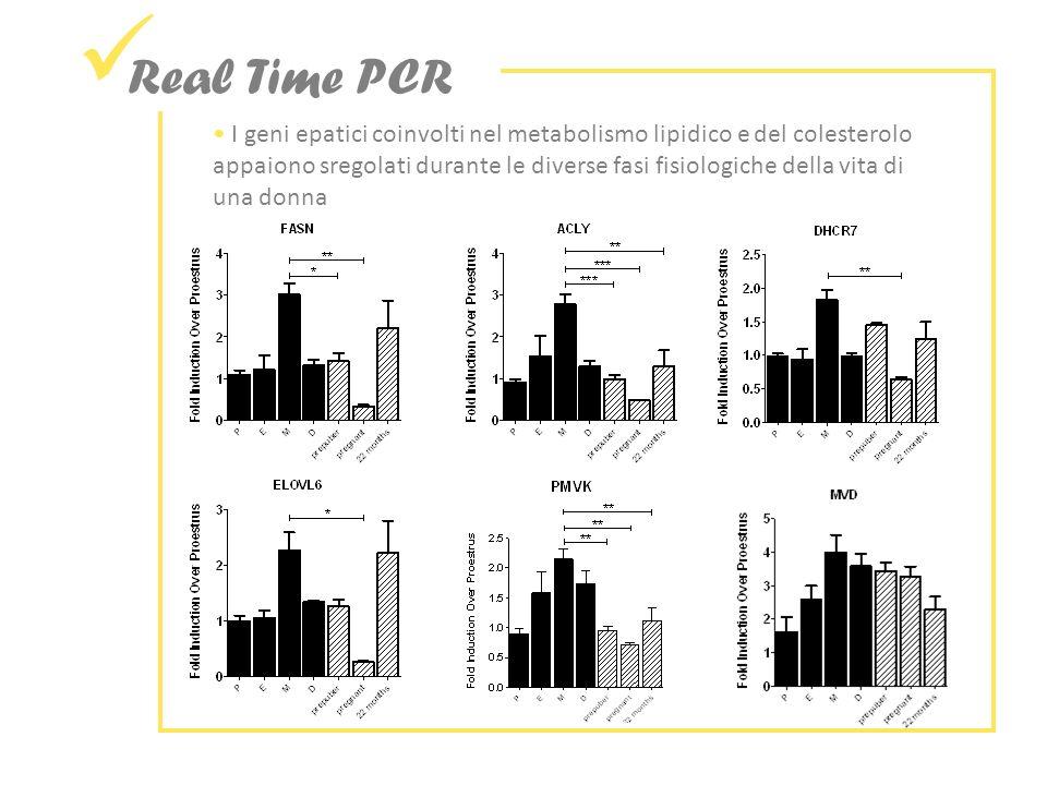 Real Time PCR I geni epatici coinvolti nel metabolismo lipidico e del colesterolo appaiono sregolati durante le diverse fasi fisiologiche della vita di una donna