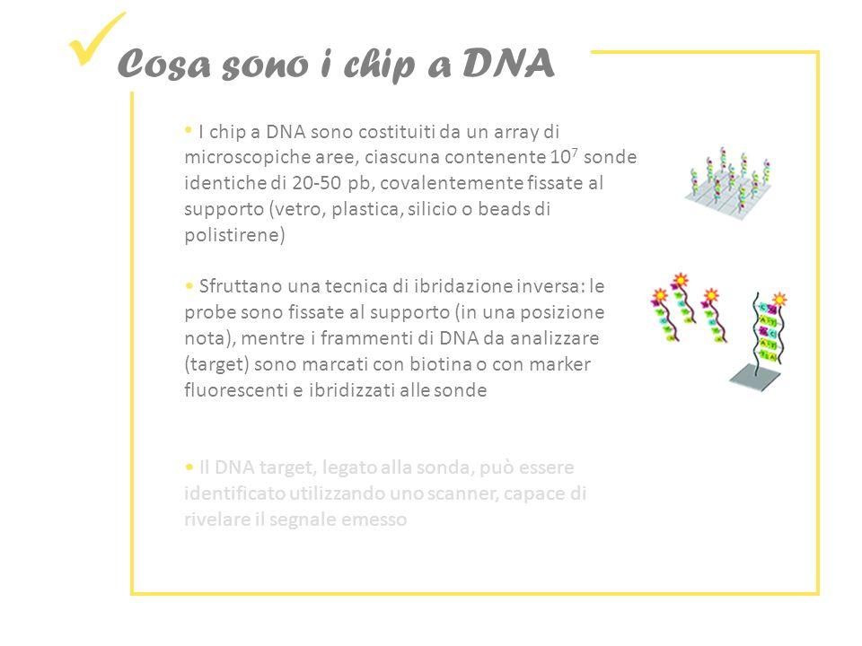 I chip a DNA sono costituiti da un array di microscopiche aree, ciascuna contenente 10 7 sonde identiche di 20-50 pb, covalentemente fissate al supporto (vetro, plastica, silicio o beads di polistirene) Sfruttano una tecnica di ibridazione inversa: le probe sono fissate al supporto (in una posizione nota), mentre i frammenti di DNA da analizzare (target) sono marcati con biotina o con marker fluorescenti e ibridizzati alle sonde Il DNA target, legato alla sonda, può essere identificato utilizzando uno scanner, capace di rivelare il segnale emesso Cosa sono i chip a DNA