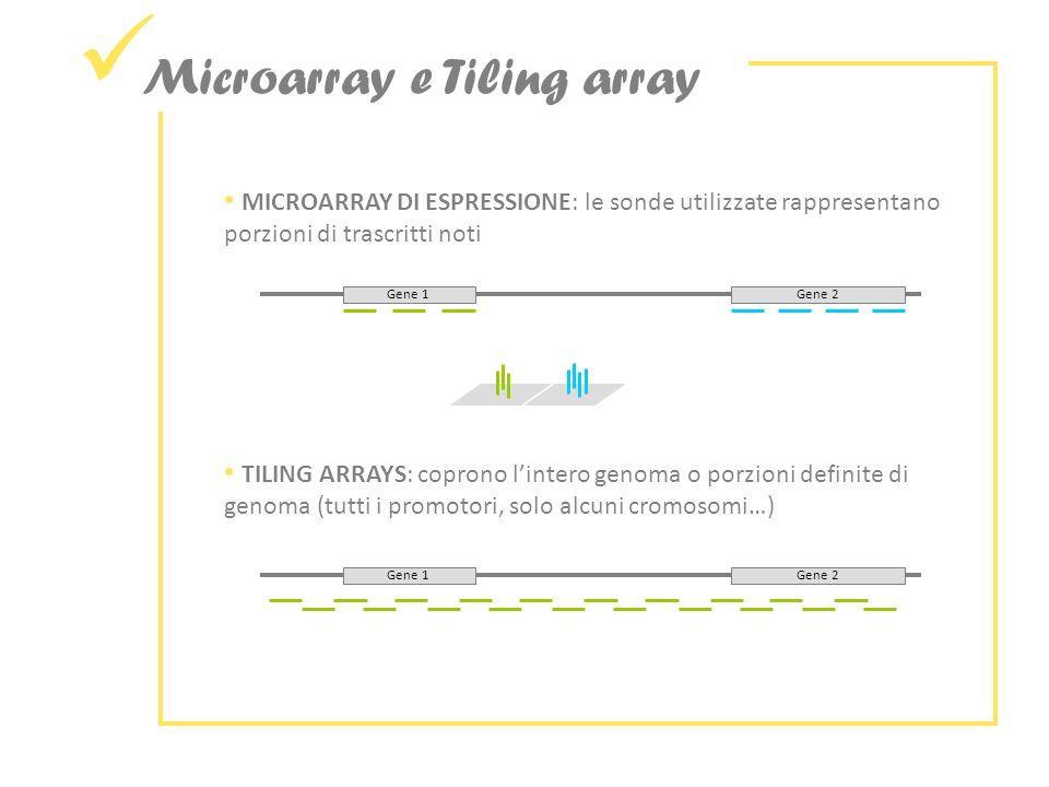 Microarray e Tiling array MICROARRAY DI ESPRESSIONE: le sonde utilizzate rappresentano porzioni di trascritti noti Gene 1Gene 2 TILING ARRAYS: coprono lintero genoma o porzioni definite di genoma (tutti i promotori, solo alcuni cromosomi…) Gene 1Gene 2