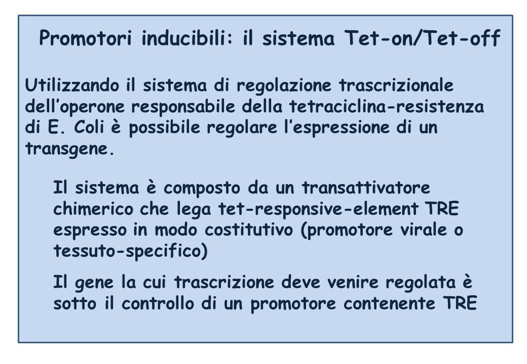 Promotori inducibili: il sistema Tet-on/Tet-off Utilizzando il sistema di regolazione trascrizionale delloperone responsabile della tetraciclina-resistenza di E.