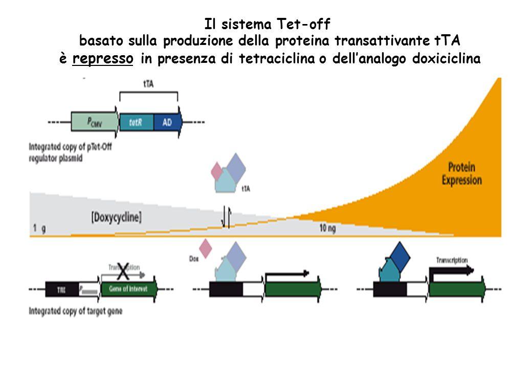 Il sistema Tet-off basato sulla produzione della proteina transattivante tTA è represso in presenza di tetraciclina o dellanalogo doxiciclina