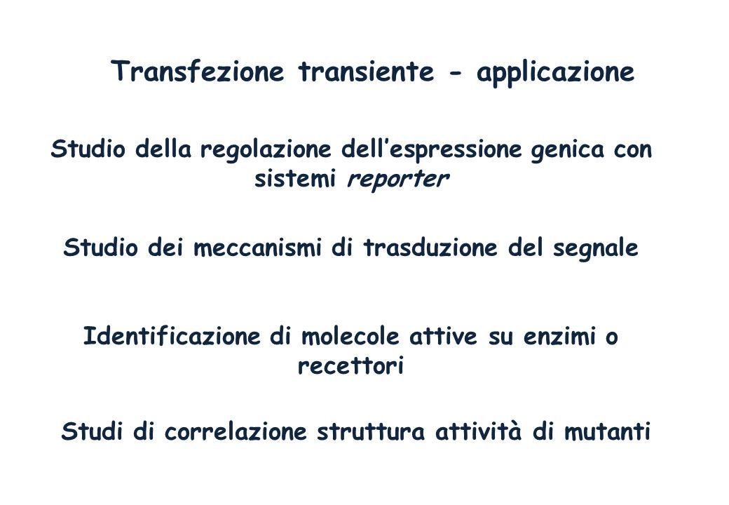 Transfezione transiente - applicazione Studio della regolazione dellespressione genica con sistemi reporter Studio dei meccanismi di trasduzione del s