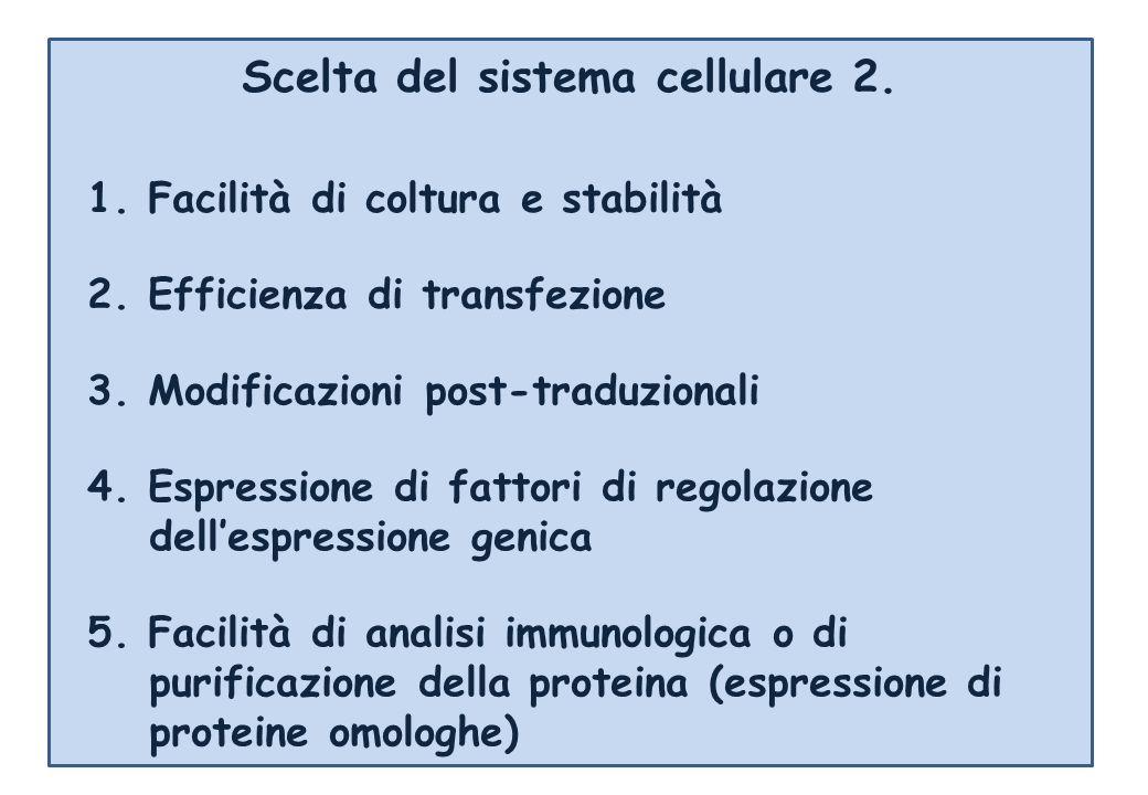 Scelta del sistema cellulare 2. 2. Efficienza di transfezione 3. Modificazioni post-traduzionali 4. Espressione di fattori di regolazione dellespressi