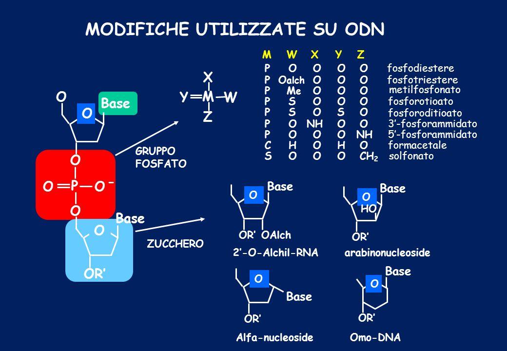 MODIFICHE UTILIZZATE SU ODN YW M X Z O O Base - OO P O O GRUPPO FOSFATO ZUCCHERO Base OR O OAlch 2-O-Alchil-RNA MWXYZ POOOOfosfodiestere PO alch OOOfo
