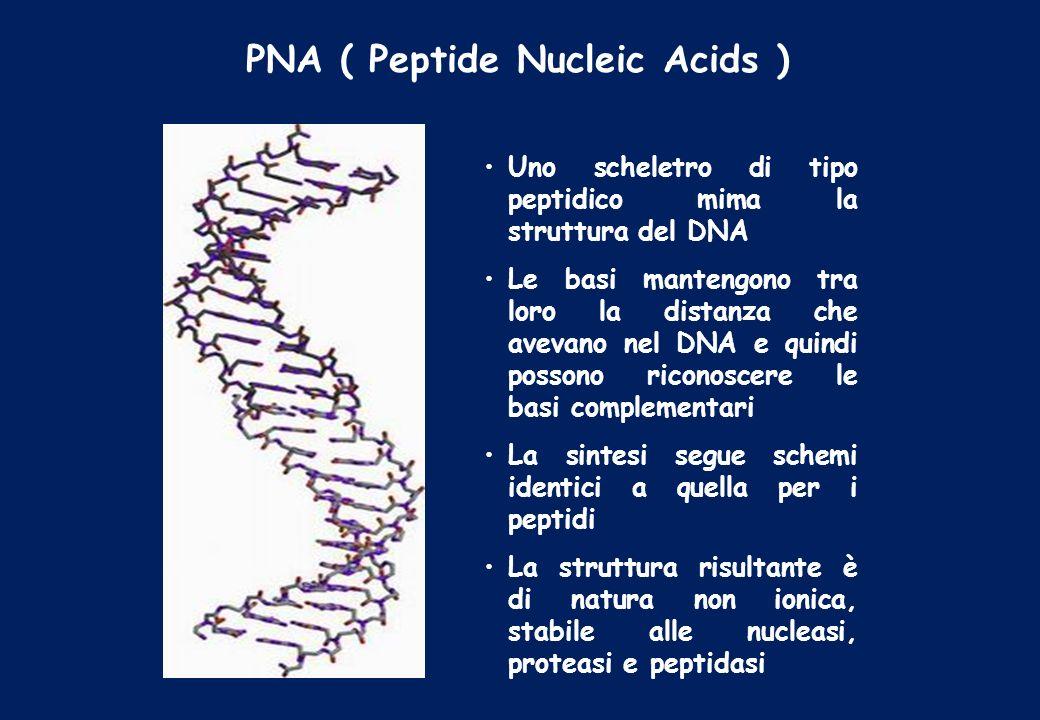 PNA ( Peptide Nucleic Acids ) Uno scheletro di tipo peptidico mima la struttura del DNA Le basi mantengono tra loro la distanza che avevano nel DNA e