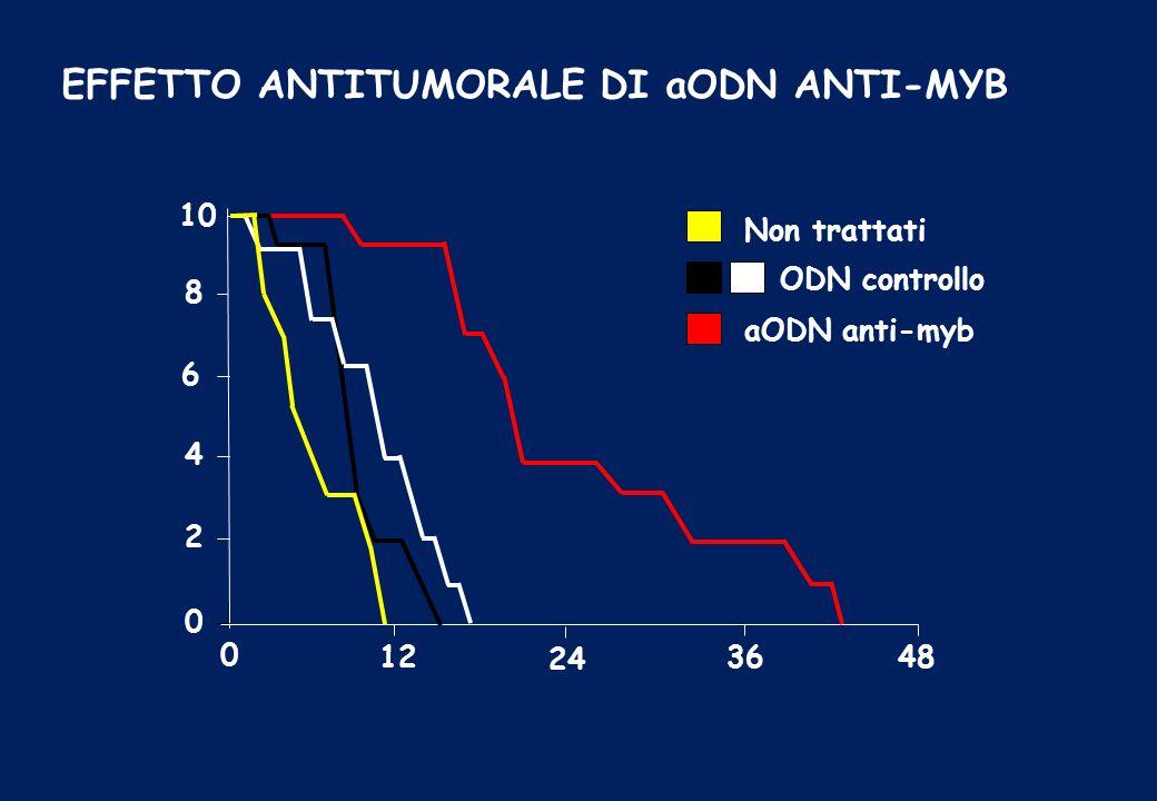 EFFETTO ANTITUMORALE DI aODN ANTI-MYB 10 8 6 4 2 0 0 12 24 3648 aODN anti-myb Non trattati ODN controllo