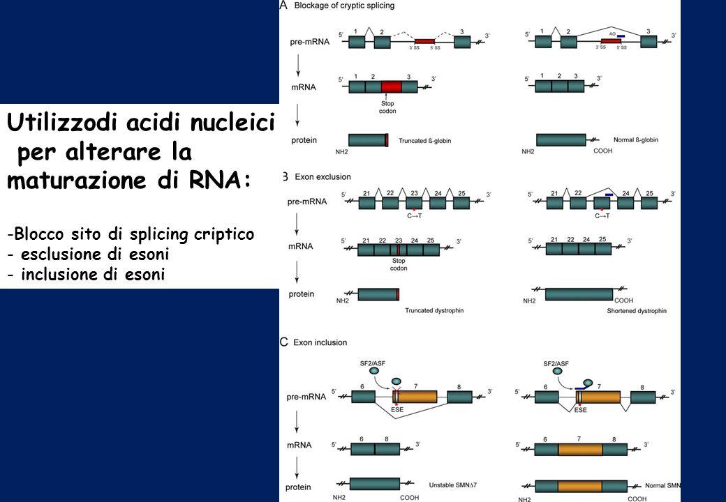 Utilizzodi acidi nucleici per alterare la maturazione di RNA: -Blocco sito di splicing criptico - esclusione di esoni - inclusione di esoni
