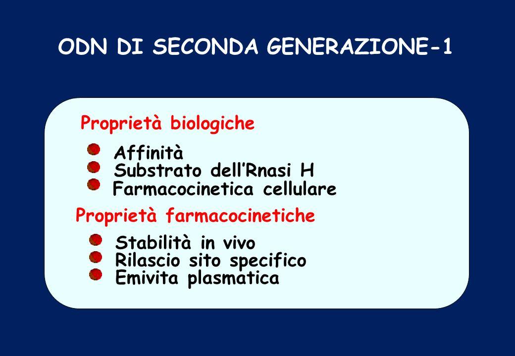 ODN DI SECONDA GENERAZIONE-1 Proprietà biologiche Affinità Substrato dellRnasi H Farmacocinetica cellulare Proprietà farmacocinetiche Stabilità in viv
