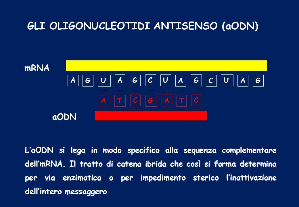 GLI OLIGONUCLEOTIDI ANTISENSO (aODN) A C A U C G A U G A G C U G T A G C T A … … … … … … … aODN mRNA LaODN si lega in modo specifico alla sequenza com